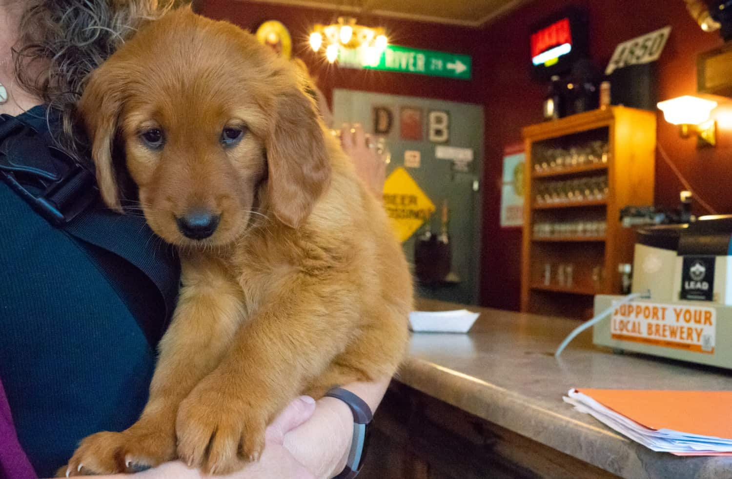 Pet Friendly Breweries And Wineries In South Dakota S Black Hills