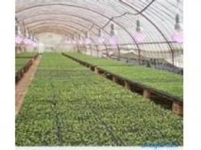 2017 Global LED Agricultural Grow Lights Market Trends Survey & Opportunities Report @ http://www.orbisresearch.com/reports/index/2017-market-research-report-on-global-led-agricultural-grow-lights-industry .