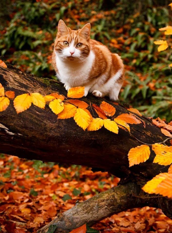 Pin van Bea Brouwer op Cats & Red Ginger.