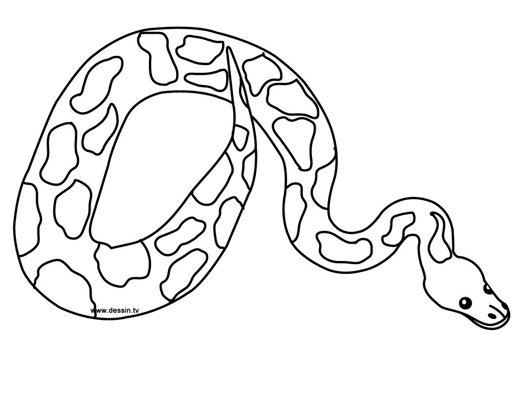 Free Printable Snake Coloring Pages For Kids Snake