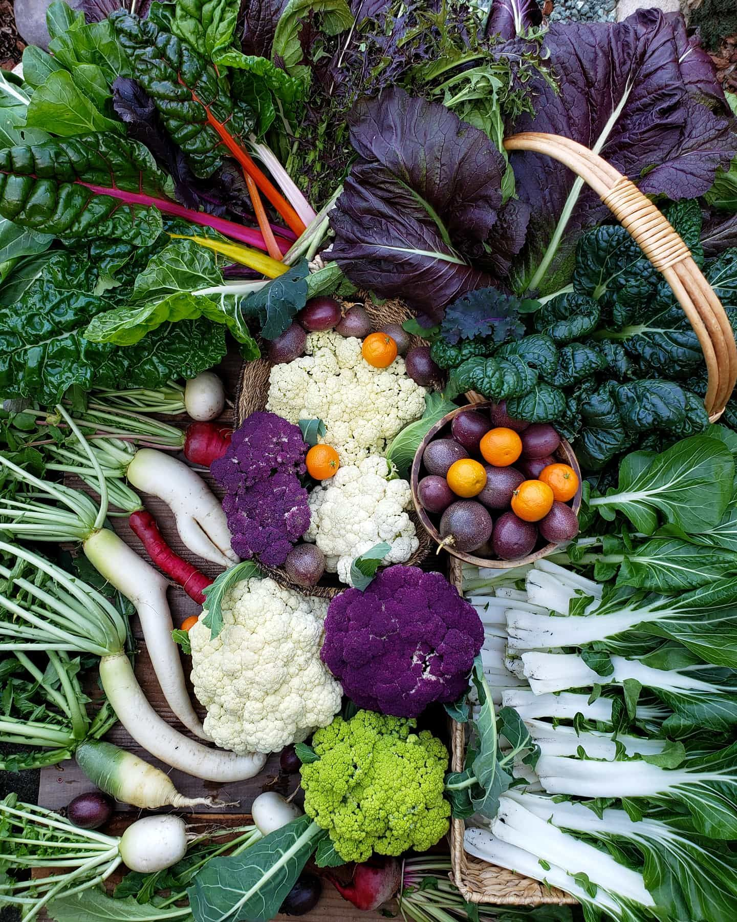 Best Vegetables For A Fall Garden: Starting A Fall Garden: Cool Season Vegetable Varieties To