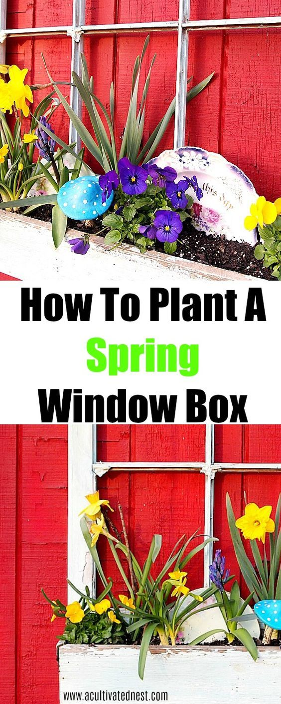 How to Plant A spring Window Box #steingartenideen