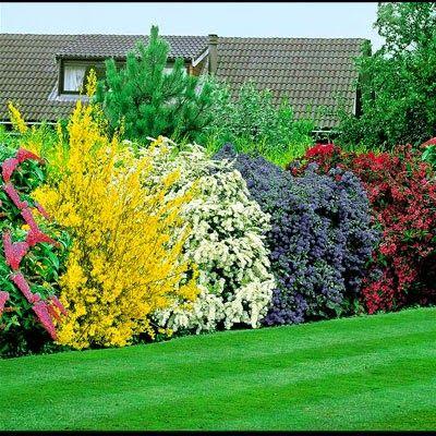 Tips Rumah Cantik Dengan Pagar Tanaman Pagar Tanaman Inspirasi Taman Taman Luar Ruangan