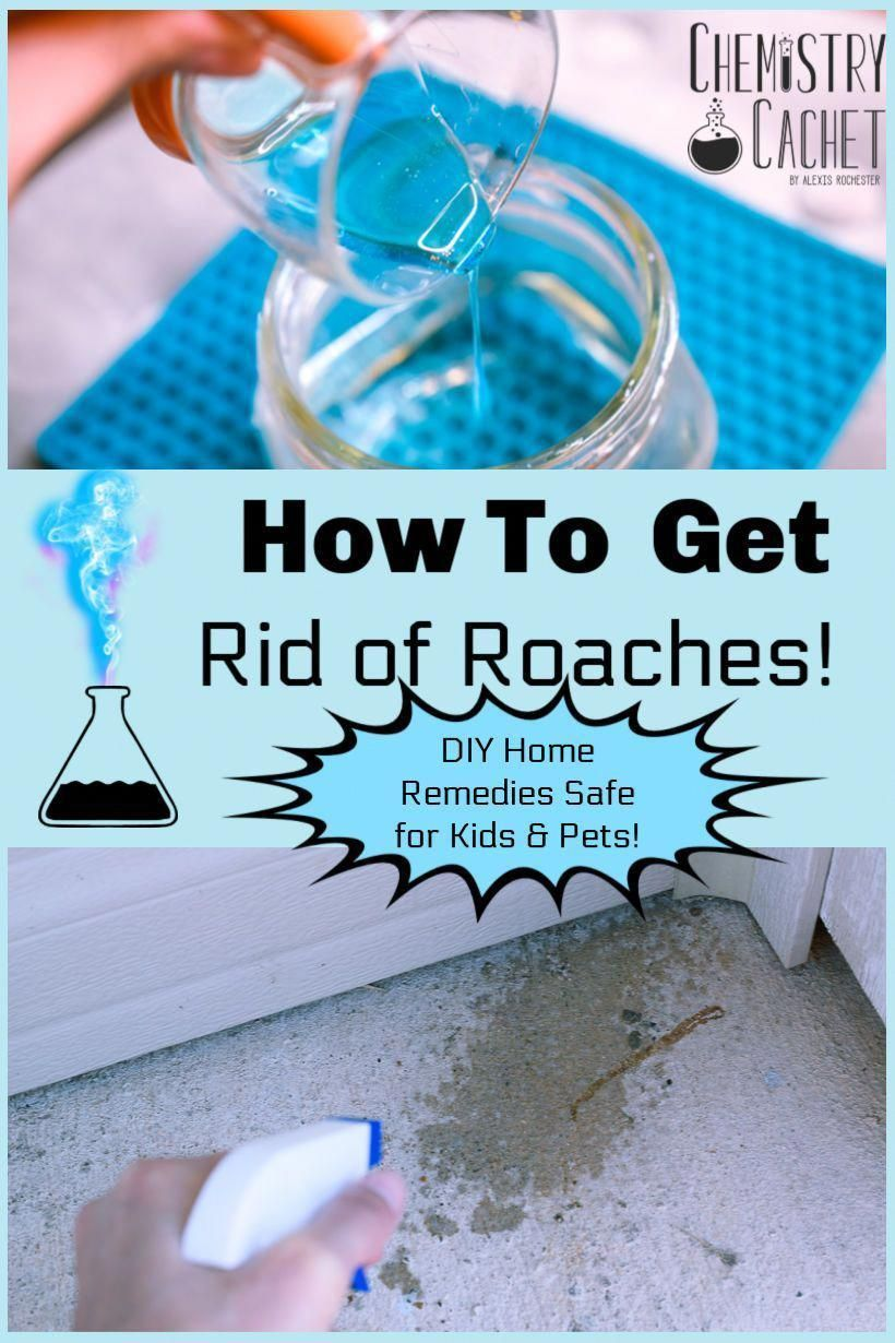 Cleaning Tips Tips Are Available On Our Internet Site Look At This And You Will Not Be Sorry You Did Cleaning In 2020 Home Remedies For Roaches Roaches Kill Roaches