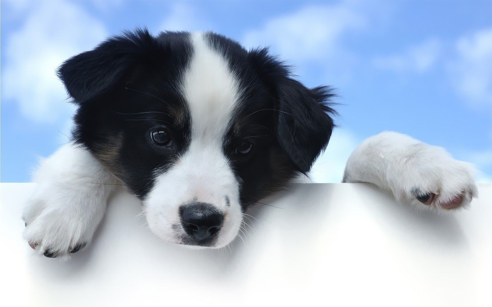 Puppy wallpaper dogs animals wallpapers for free download about