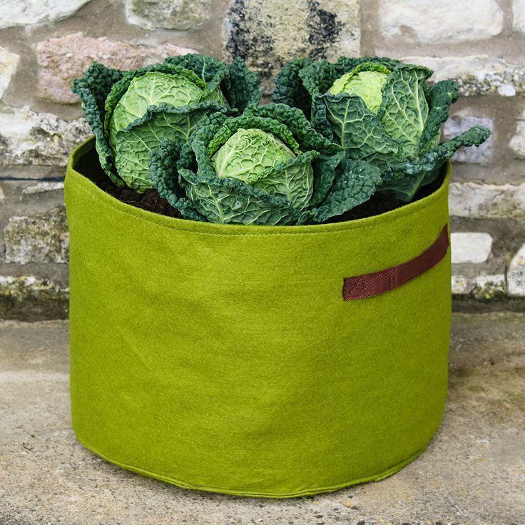 #in # Gärtner # Gemüse # kaufen #online #Pflanzentüte - # - #gartner #gemuse #kaufen #online #pflanzentute - #PflanzenTopf #tomatenpflanzen