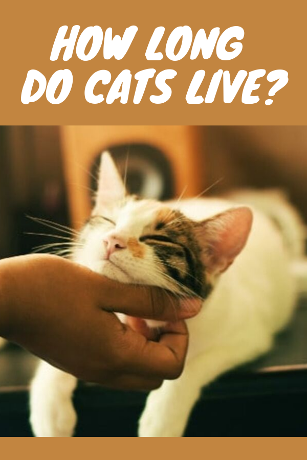 Aging Gracefully How Long Do Cats Live (With images