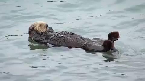 Cuteness Alert! Adorable Otter Gif! ❤