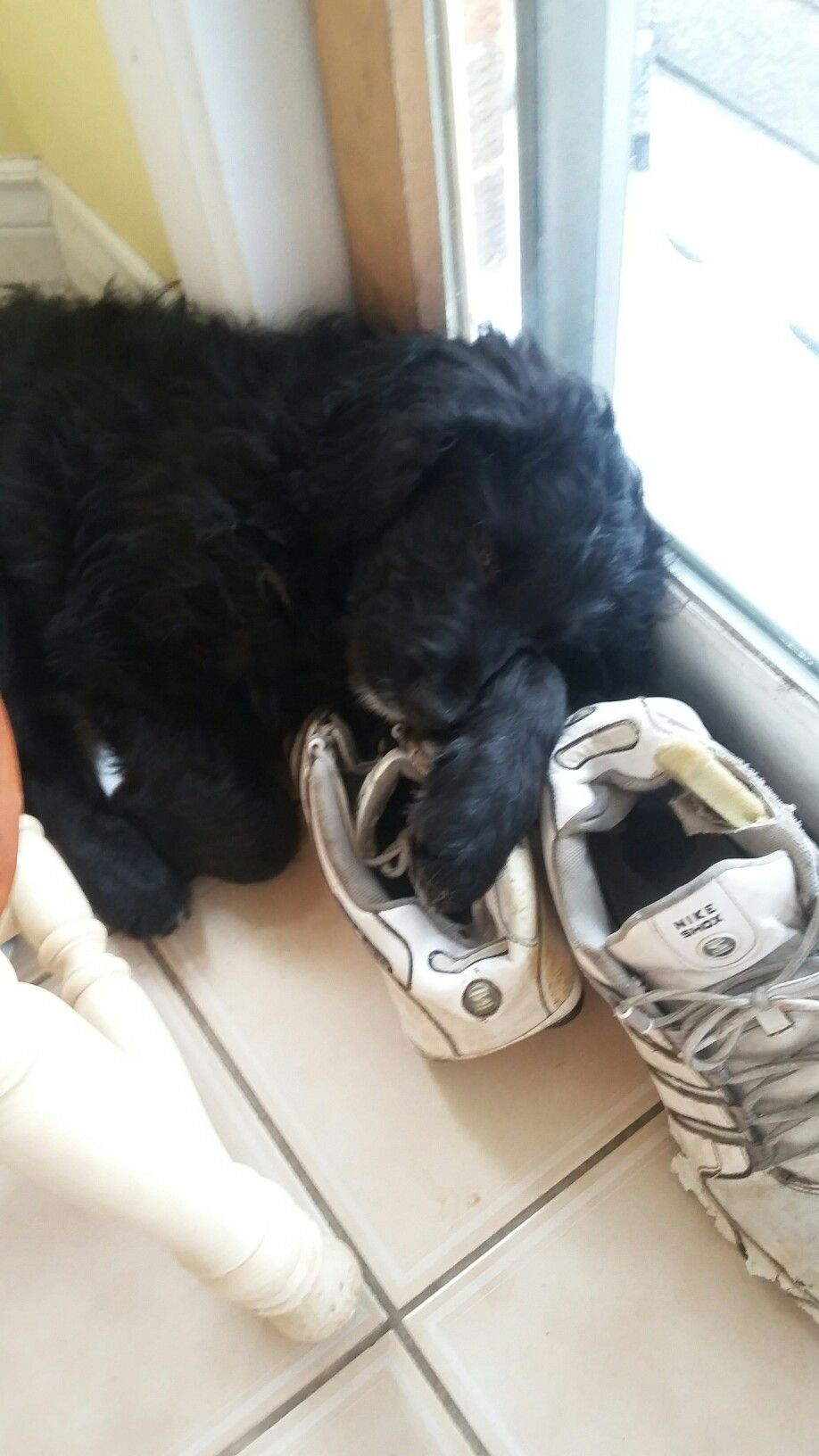 Puppy sleep Bernedoodles and more Pinterest