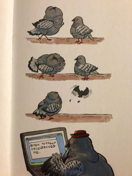 """I have never seen a lady pigeon who looked impressed by the sexy pigeon dance."""