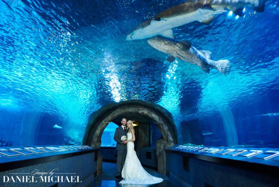 Find Greater Cleveland Aquarium Wedding Venue One Of Best Venues In Ohio