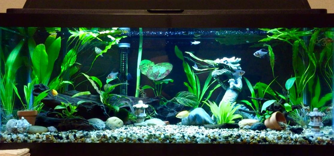 20 Gallon Long Tank   Aquascape aquarium, Freshwater ...