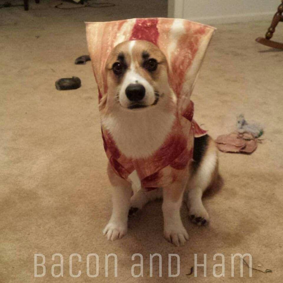 In Honor Of International Bacon Day I Present Ham Dressed As Bacon Corgi Corgi Names Corgi Puppy
