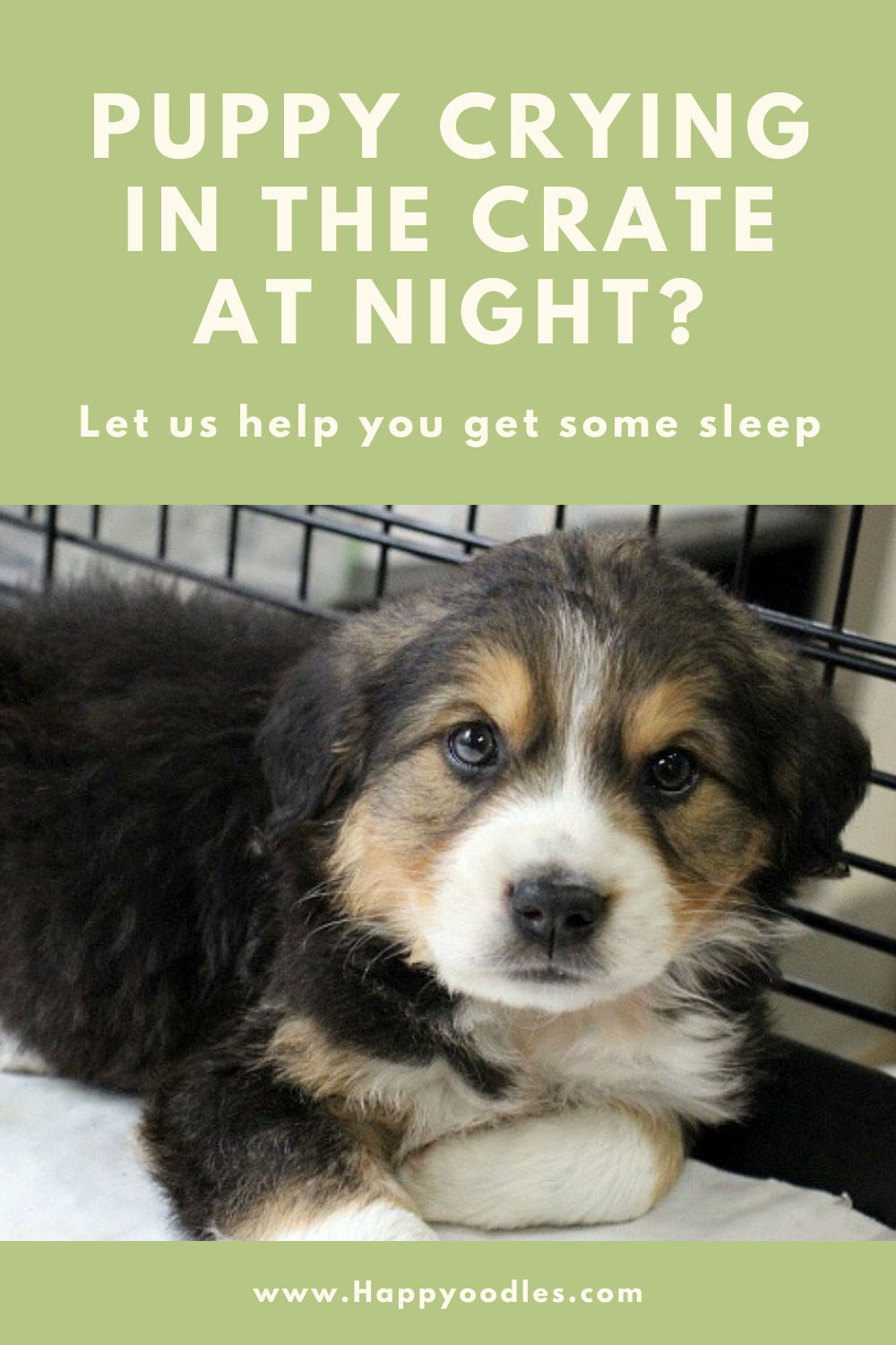 Puppy Crying in the Crate at Night? How to Make it Stop