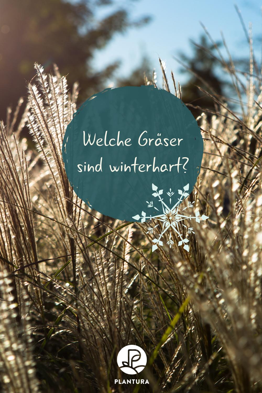 Winterharte Graser Sortenwahl Richtige Pflege Plantura Winterharte Graser Ziergras Winterhart Winterhart
