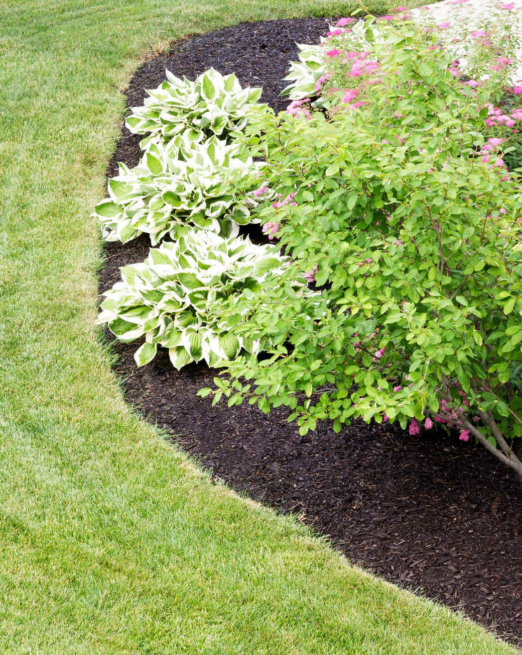 10 Gardening Mistakes To Stop Making Now Plants Garden Beds