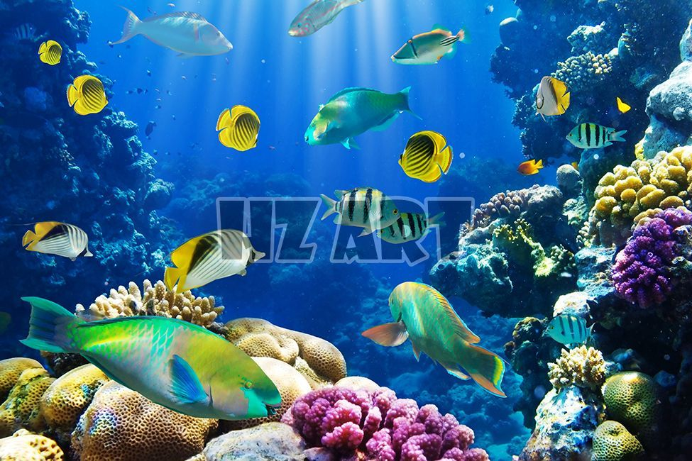 Flo 182 Fish Wallpaper Fish Background Tropical Fish Aquarium