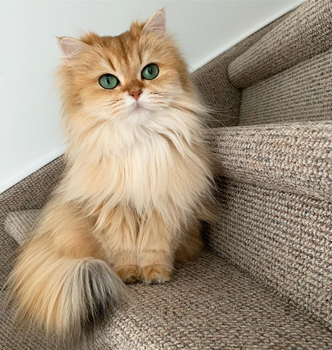 Smoothie The Cat On Instagram I M With You Every Step Of The Stair Way Cutest Cats Ever Kittens Cutest Cats