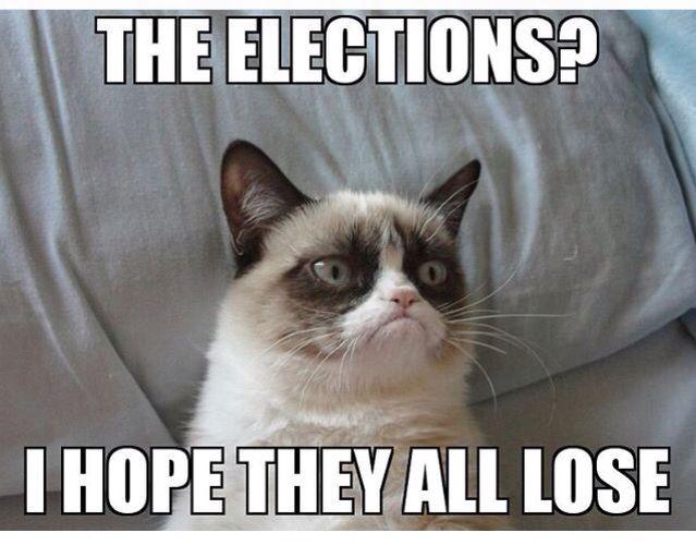 The Elections Hope The All Lose Grumpy Cat Humor Grumpy Cat Quotes Grumpy Cat Meme