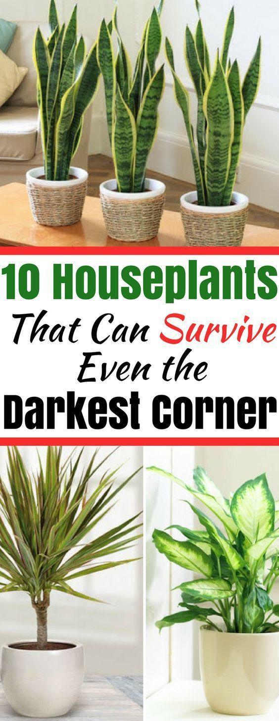 Houseplants That Can Survive in Even the Darkest Corner #plantsindoor