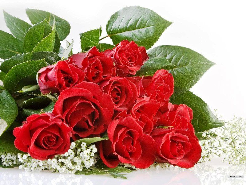 Fresh Happy Red Rose Day HD Images Wallpapers Orkut Scraps Whatsapp Facebook