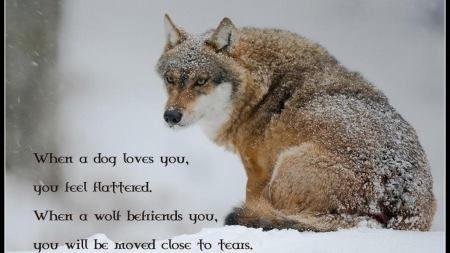 Photo de Kamots Amani  | my lovely wolf's | Alphas