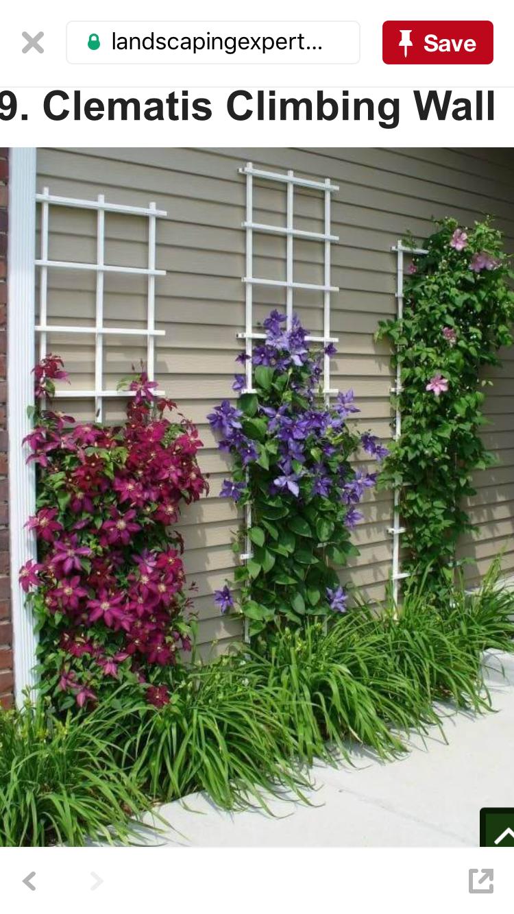 Climbing Wall Of Clematis Vine Climbing Flowers Garden Design Flower Garden