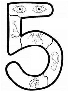 worksheet. Special Senses Worksheet. Grass Fedjp Worksheet Study Site