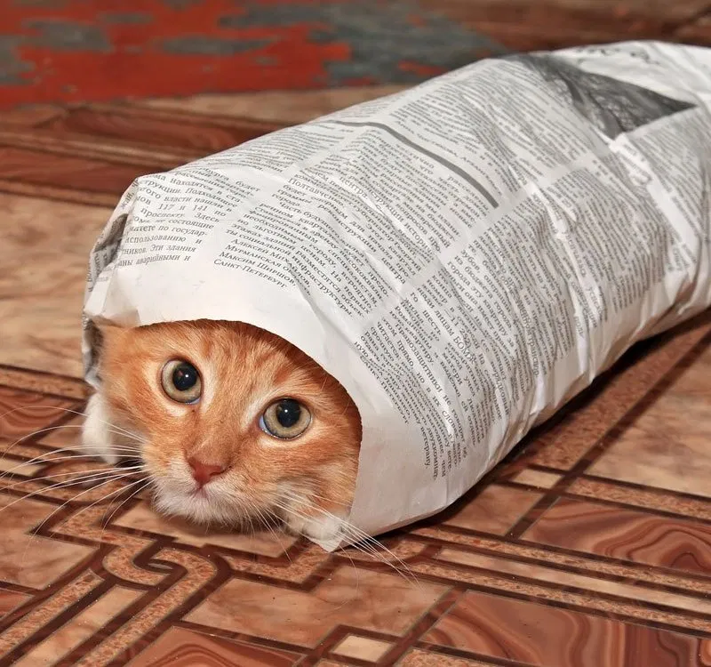 In The News Interesting Stories That Could Impact You And Your Cats Kitten Care