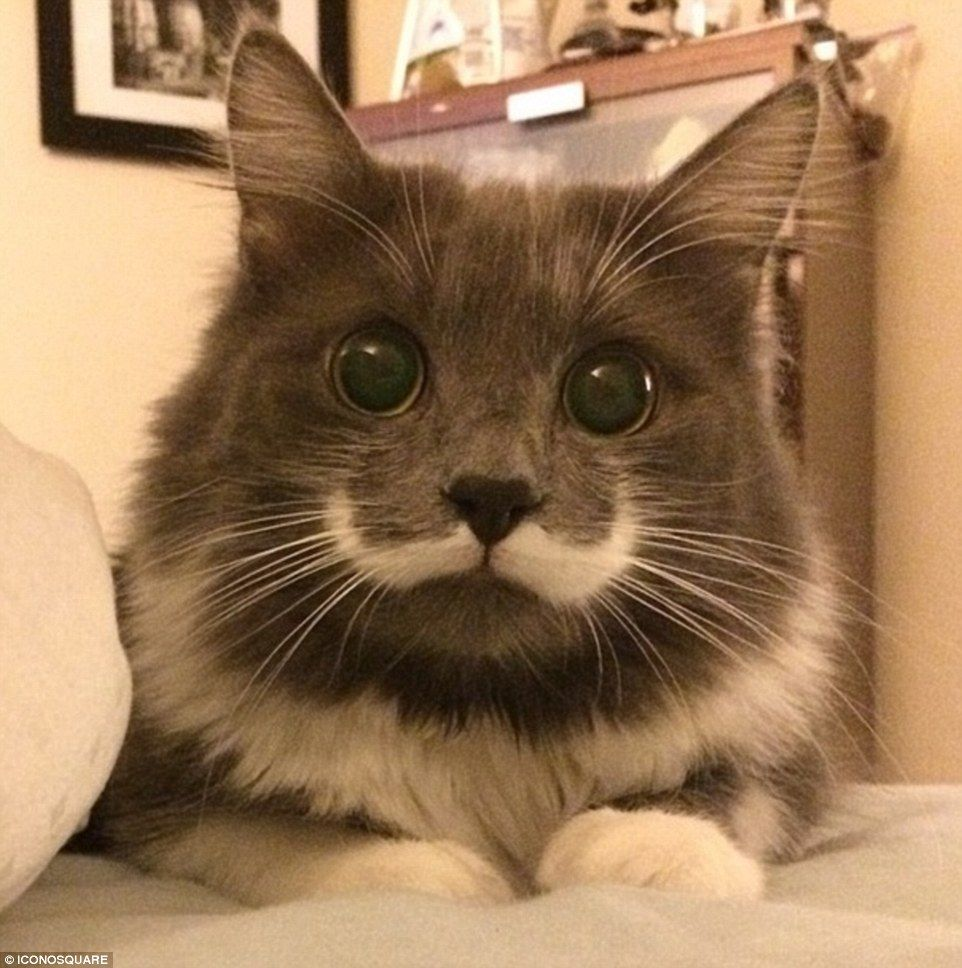 This Cat Has A Ushaped Thin White Tache And With Wide Eyes He - 32 adorable photos cats growing