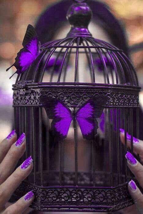 Purple | Porpora | Pourpre | Morado | Lilla | 紫 | Roxo | Colour | Texture | Pattern | Style | Form | Lila Schmetterlinge |
