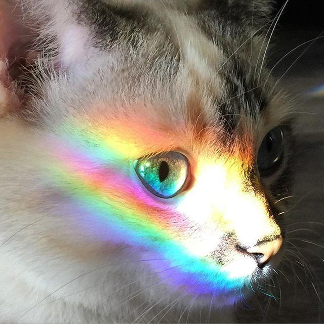 #CuteKitty #PetsAddLife #AllAboutCats