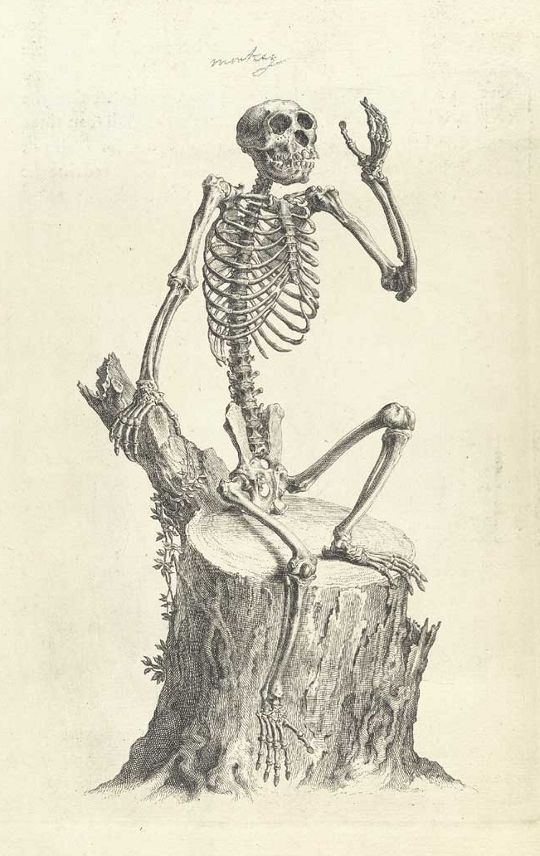 William Cheselden\'s Osteographia (1733) | The Public Domain Review ...