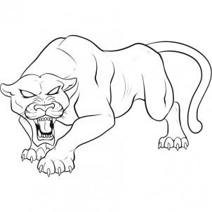 how to draw rainforest animals