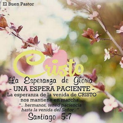 Santiago 5:7 Por tanto, hermanos, tened paciencia hasta la venida del Señor. Mirad cómo el labrador espera el precioso fruto de la tierra, aguardando con paciencia hasta que reciba la lluvia temprana y la tardía.♔