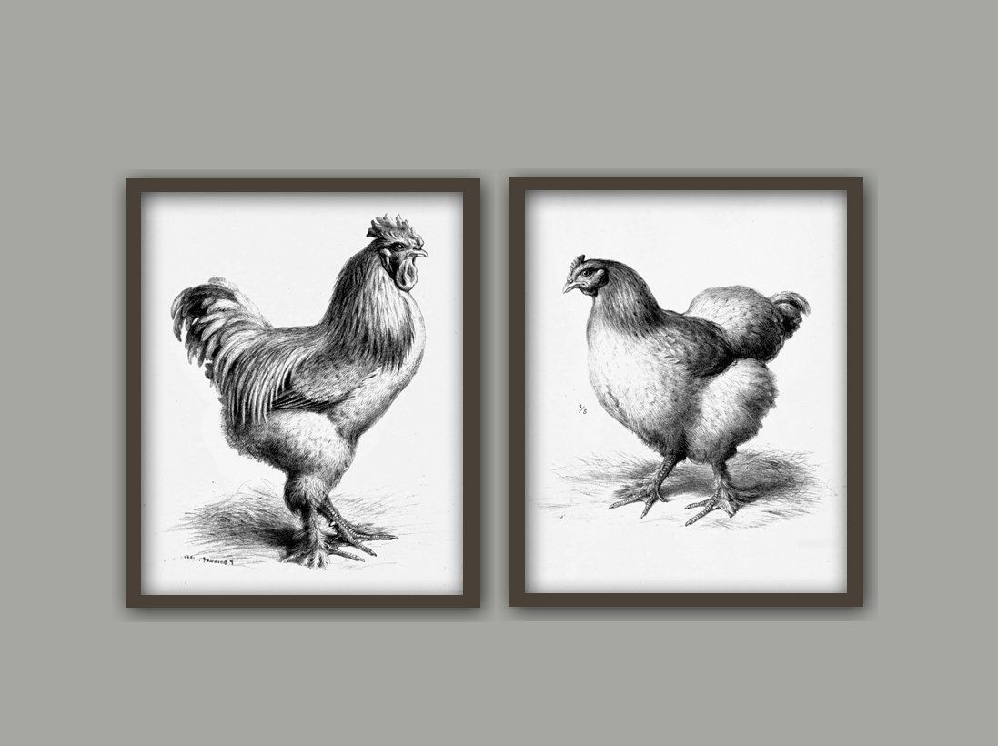 Chicken Wall Art Print Set Of 2 Kitchen Decor Rooster Etsy Farm Wall Art Rooster Painting Wall Art Prints