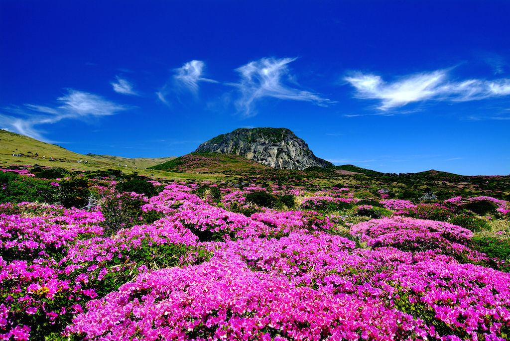 13 Awesome Attractions In Jeju Island You Shouldn T Miss Jeju Island South Korea Jeju Island Jeju