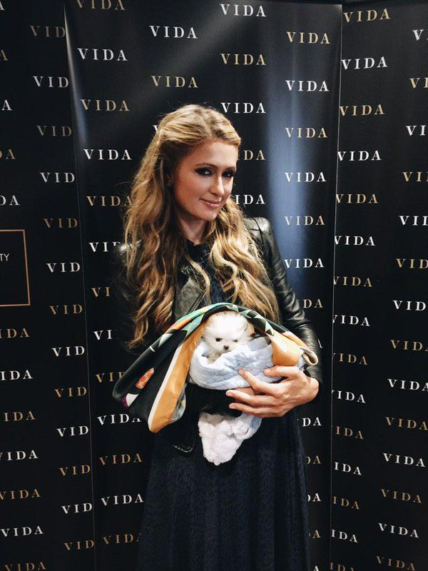 #ParisHilton with her #puppy in #silk #scarf, great outfit for it's 1st #photo shoot!  #celebrity #womenwithdogs #dog #dogsinscarves #dogstyle #fashiondog #puppylove #fashionisita #silkscarf #celebritylook #celebritystyle #style Photo: VIDA @shopVIDA Ms @ParisHilton loves our Parliamentary Silk Scarf! Check it out here: http://bit.ly/14YCLgq #GoldenGlobeAwards2015 pic.twitter.com/5Wg41Lymio