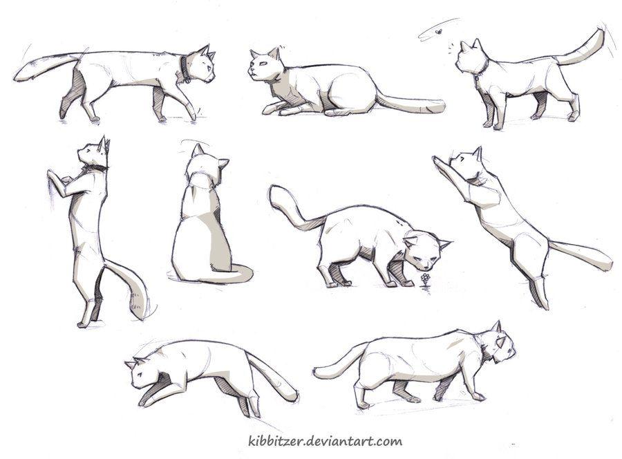 Cat reference by Kibbitzer on DeviantArt | manga sketches ...