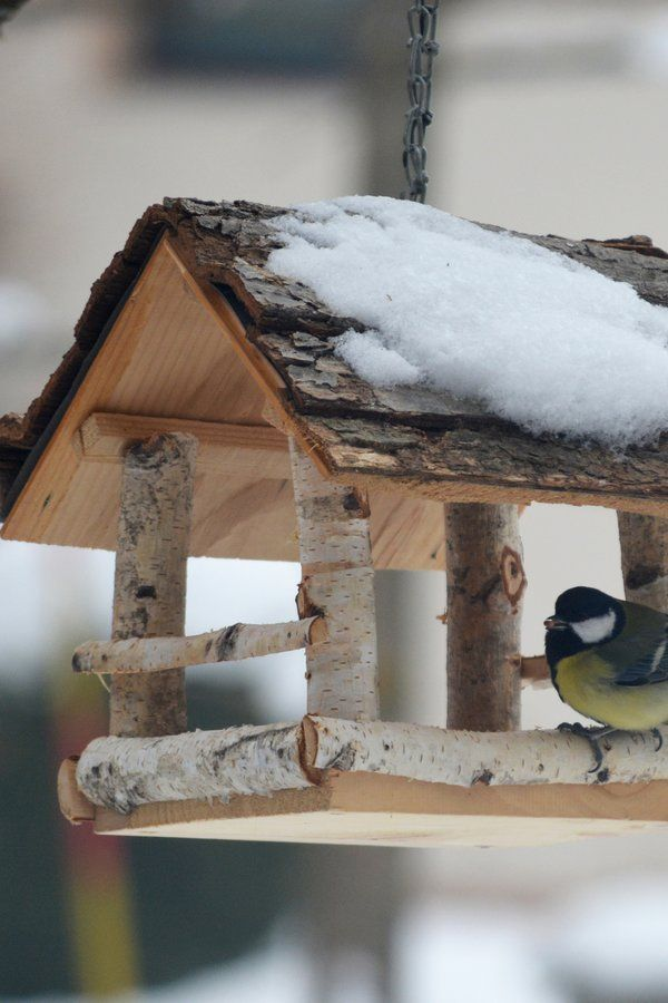 Vogelhaus bauen DIY Bauanleitung für ein gemütliches Futterhäuschen