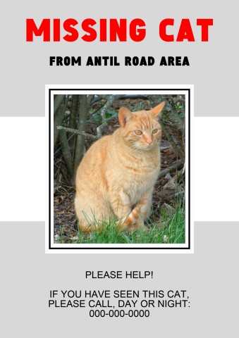 missing cat poster lost cat poster