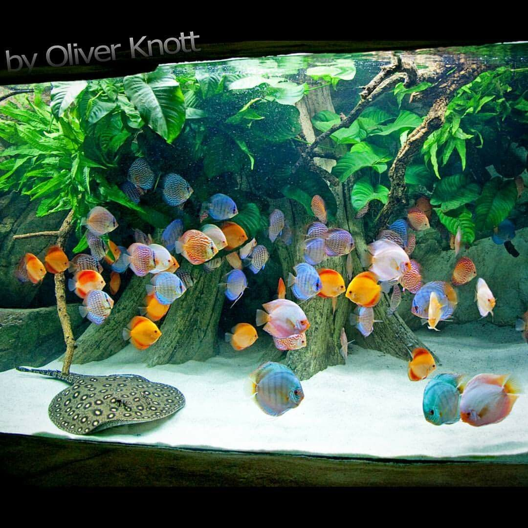 Cute  Liter Year Location K lle Zoo Karlsruhe oliverknott ok aqua