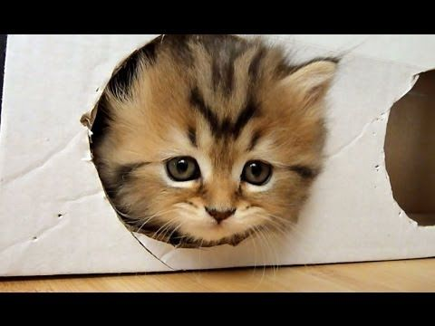 Pin By Wylone Abbott On Animals Of All Kinds Kittens Cutest Cute Cat Gif Kittens