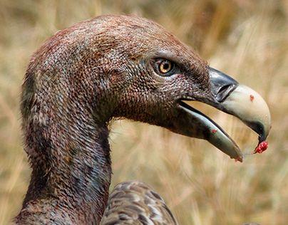 "Check out new work on my @Behance portfolio: ""3:1 Wild Birds"" http://on.be.net/1MtZbXJ"