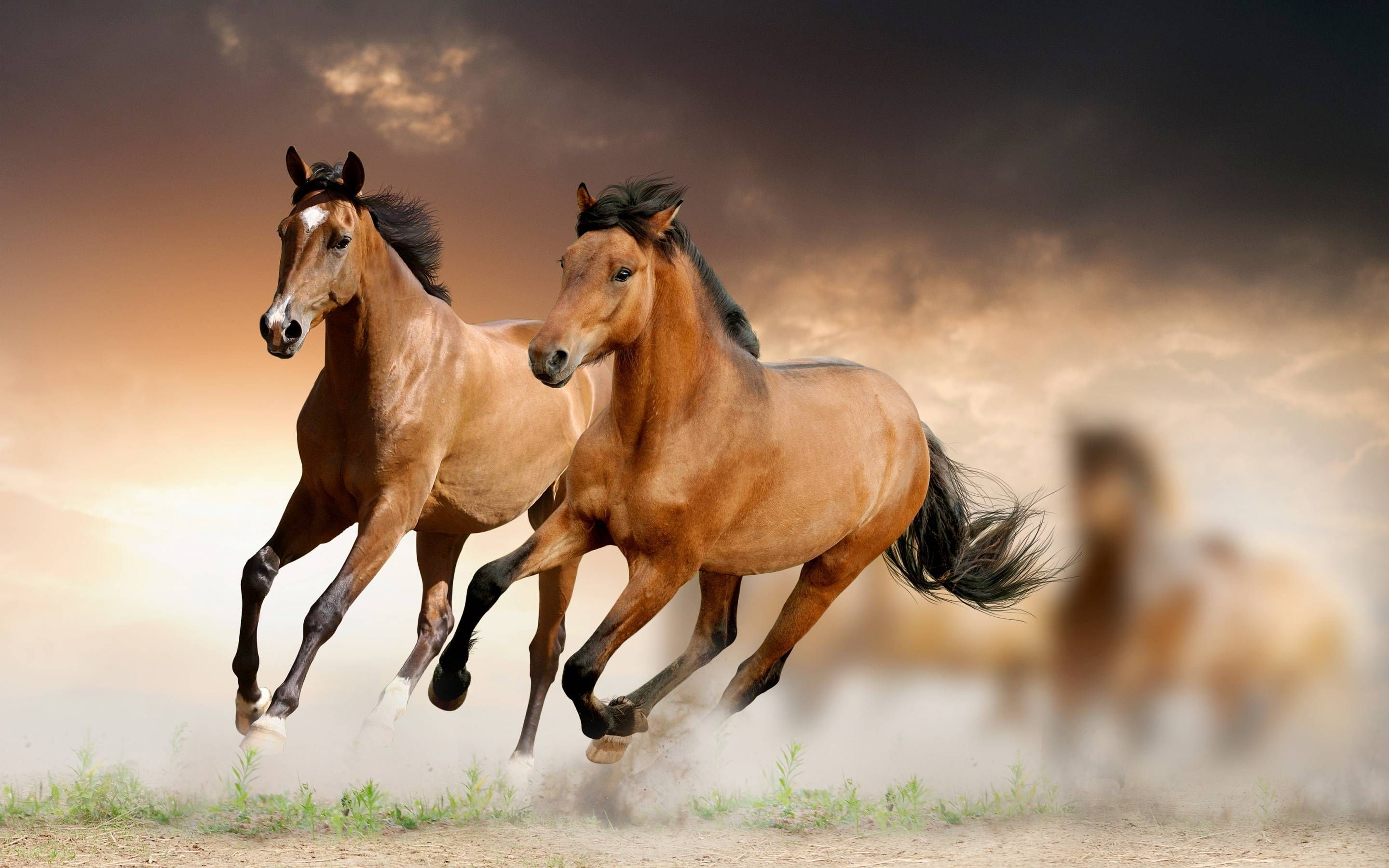 Horse HD Wallpapers Backgrounds Wallpaper HD Wallpapers