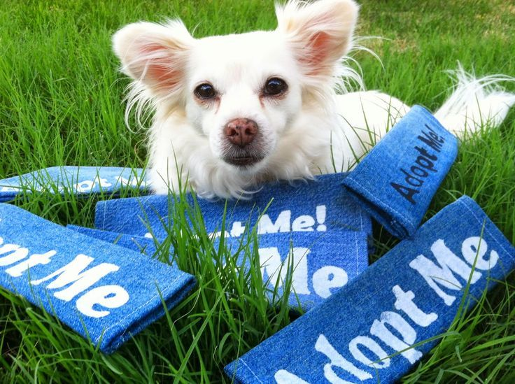 A Great Idea For Pet Tags Pet Tags Pet Paws Local Shelters