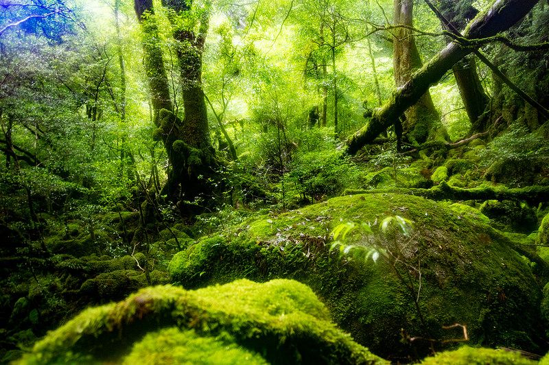もののけ姫のモデルとなった白谷雲水峡に行ってきた 太鼓岩と苔むす森を楽しむためには早朝登山がおすすめ 屋久島旅行記 屋久島 旅行記 Taka P P R S Main 美しい風景 屋久島 美しい景色