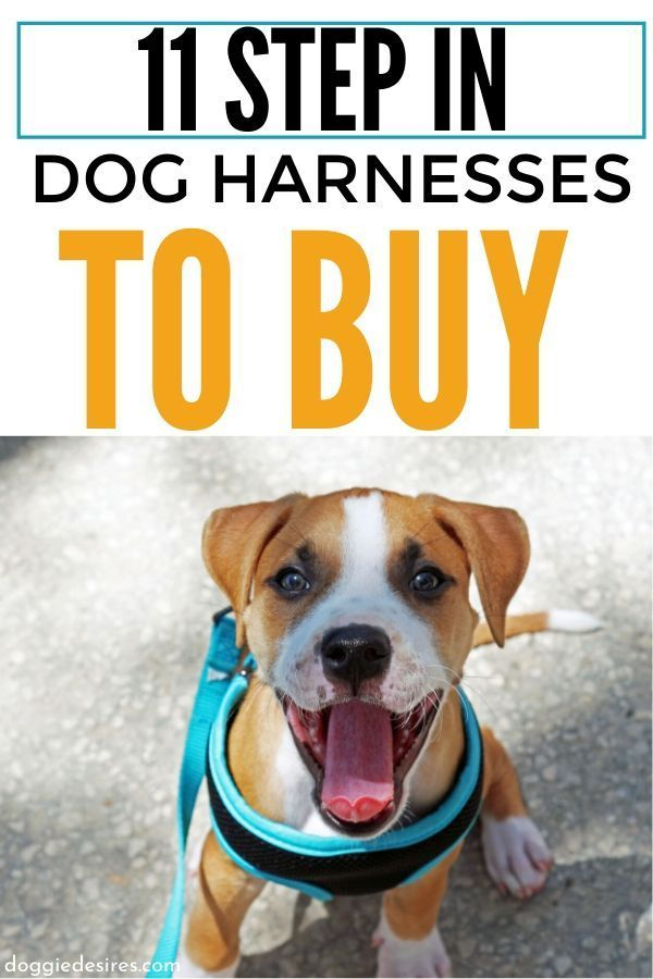 11 Step In Dog Harnesses To Consider For Your Canine Companion