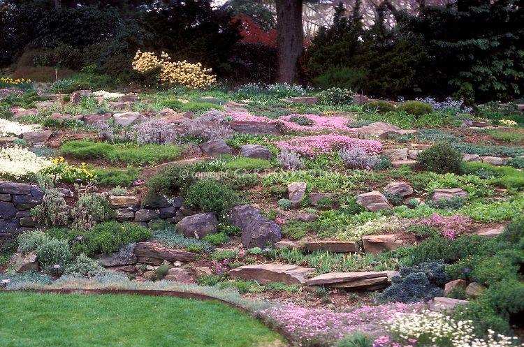 Rock Garden With Sloping Hillside Alpine Plants Mixture Flowers Thymus Lawn Grass