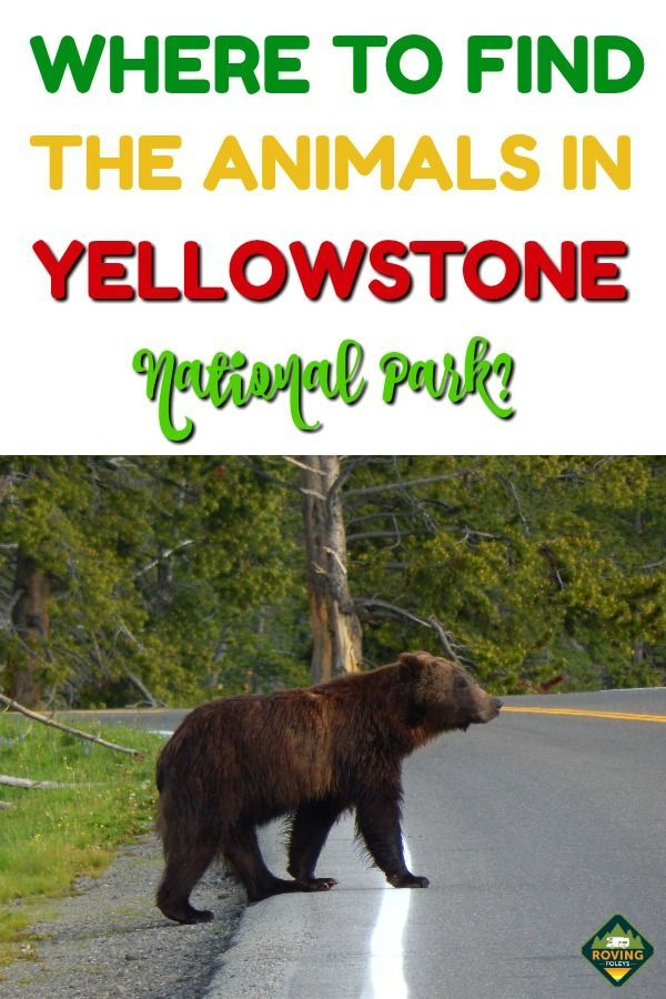 See The Animals Of Yellowstone National Park